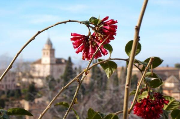 Granada flower